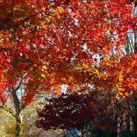 """corazón otoñal"" en medio de la rue!~~~~~~~~~~~~~~~~~~~~~""Autumn Heart"" in the middle of the rue!, Норт-Берген"