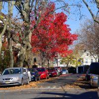 Rebecca, red flag in your neighbourhood? ??????????????la bandera roja en su barrio?    (for TomRos), Норт-Берген