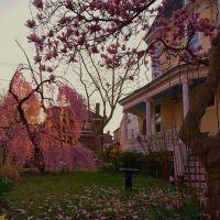 Quisiera Que La Vida asi fuese............... de color de Rosa ♥♥♥♥♥♥                     I wish life were as well Color of Rose ♥♥♥♥♥♥, Норт-Берген