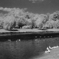 Pond at Van Saun Park, River Edge NJ, Парамус