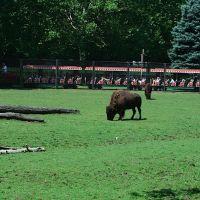 Bison of NJ, Парамус
