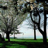 """White Blossoms"" - Harborside Walk Park - Between The Raritan Bay & Sadowsky Pkwy - Perth Amboy, NJ - 4.18.2007, Перт-Амбой"