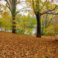 Autumn Canvas, Тинек