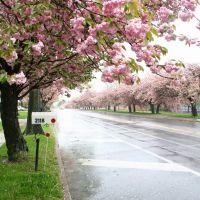 Chapel Avenue West in Cherry Hill, Черри-Хилл