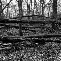 fallen trees, Ардсли