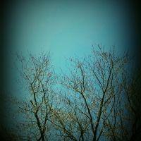 Backyard: simple edit : frame, Арлингтон