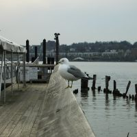 Seagull, Бикон
