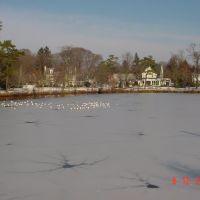 emi-lago congelado, Брайтуотерс