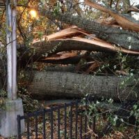 Sandy was destructive!, Броквэй