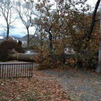 How many trees did Hurricane Sandy damage in New York?, Броквэй