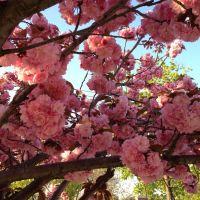 Flowers around the corner, Броквэй
