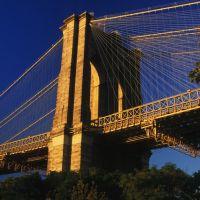 Golden Brooklyn, Бруклин