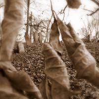 Cemetery in Autumn, Вестал
