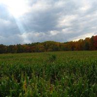 Schuyler Farms Corn Maze, Гейтс