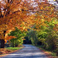 Tilson road, Гилбертсвилл