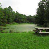 Dragonfly Pond, ДеВитт
