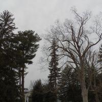 Cold Trees, ДеВитт