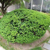 The fresh greenery of Briarwood, NY, USA, Джамайка