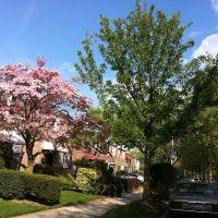 Beautiful Briarwood,Queens , New York. U.S.A., Джамайка