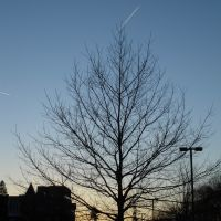 Sibley Tree, Итака
