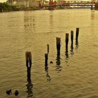 East River, Квинс