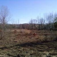 Pine Bush and Dump, Колони