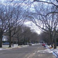 street with bare trees, Коммак
