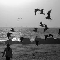 The Birds, Лонг-Бич