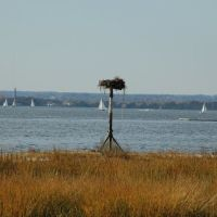 Osprey Nest overlooking Manhasset Bay, Манхассет