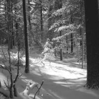 Snowlight - Cathedral Pines, Миддл-Айденд