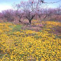 Mt Sinai, NY - Davis Peach Farm before the condos, Миддл-Айденд