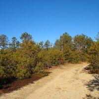 Rocky Point preserve burn area, Миддл-Айденд