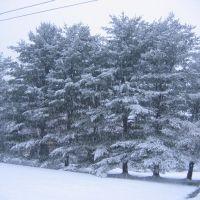 Pine Trees Separate the Properties, Нью-Хакенсак