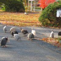 Vandewater Drive in Fall, Нью-Хакенсак