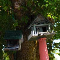... Bird House, Огденсбург
