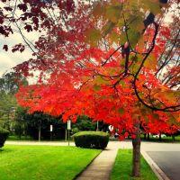 Autumn in Rockville Center, LI, Оушннсайд