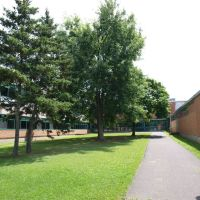 Four Trees Surrounded by School, Питчер-Хилл