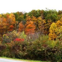 Central New York shows off her fall colors 10.14.010, Питчер-Хилл