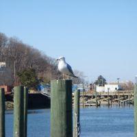 Port Jeferson, Long Island, NY, Порт-Джефферсон