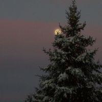 Moonlit Tree, Ром