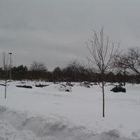SUNY Parking Lot, Росслевилл