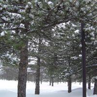 SUNY in winter, Росслевилл