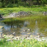 Duck Pond in Congress Park, Саратога-Спрингс
