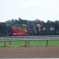 Horse Race, Саратога-Спрингс
