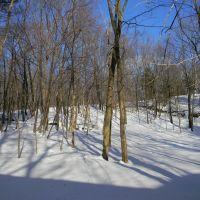 Philmont woods, Филмонт