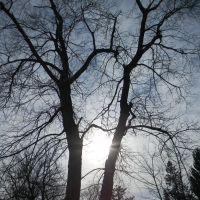 Shadow Trees, Филмонт