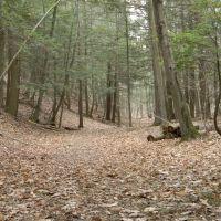 Trail to high falls, Филмонт