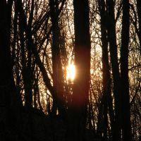 Sunset through the trees, Филмонт