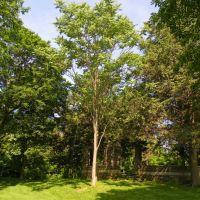 Tree, Филмонт