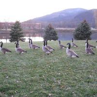 Gooses, Фишкилл